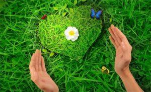сердце, руки, травы