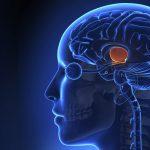 Причины и симптомы аденомы гипофиза