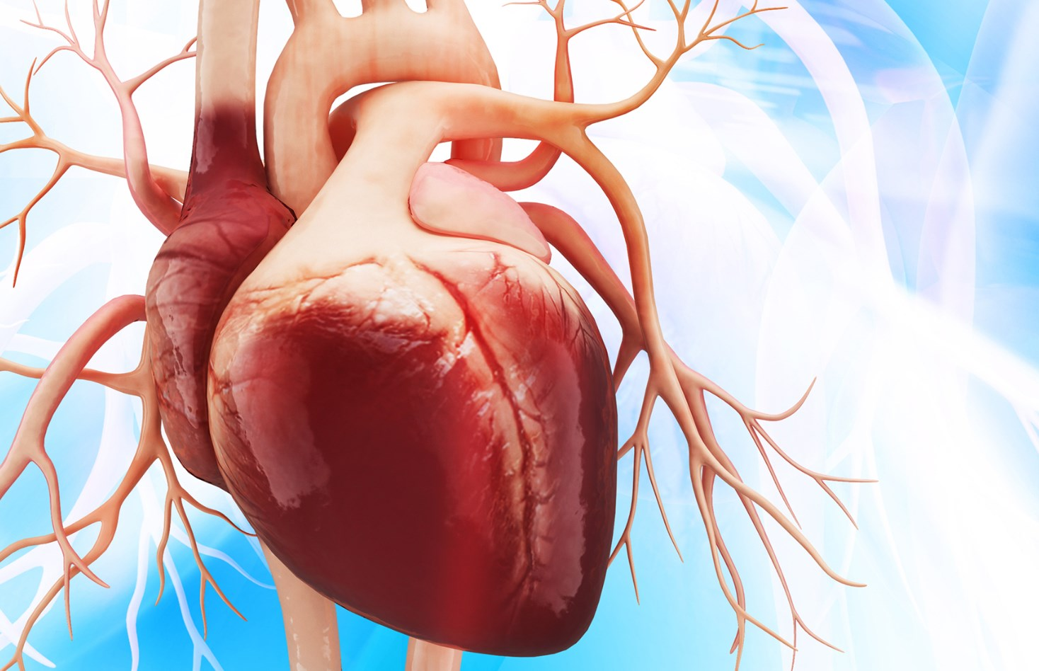 Аорта сердце