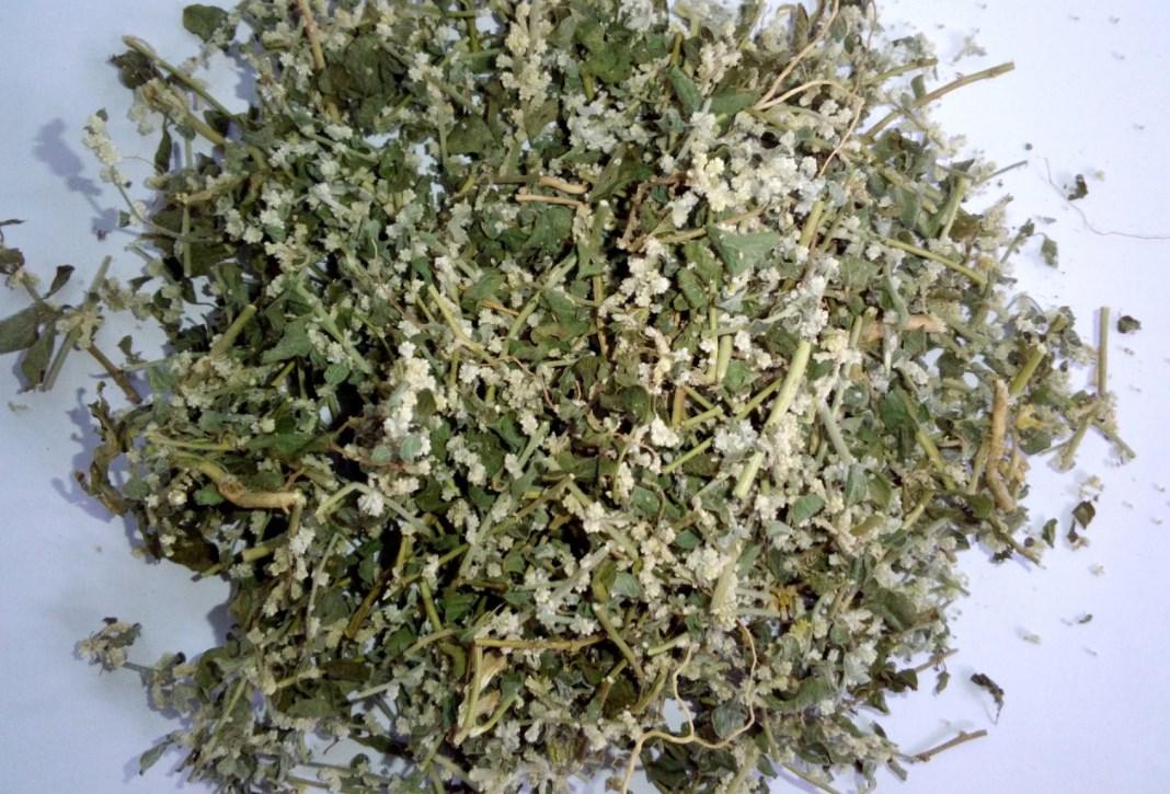 трава эрва шерстистая