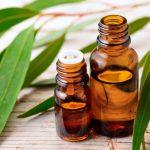 Свойства и применение масла эвкалипта